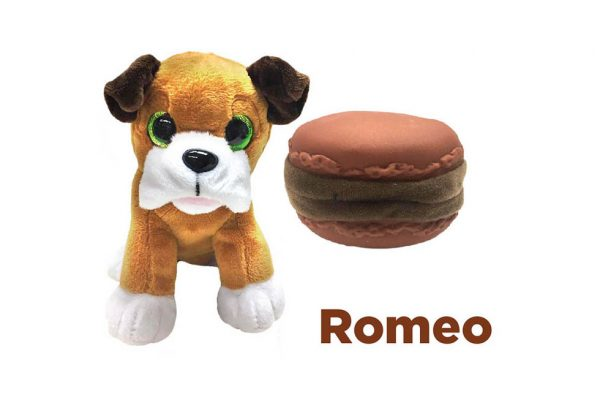 30837---SWEET-PUPS-ROMEO